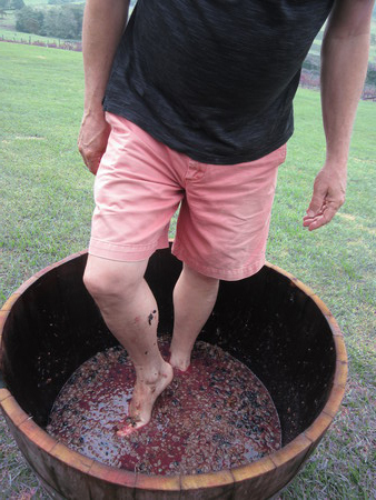 wine pressing the ancient way